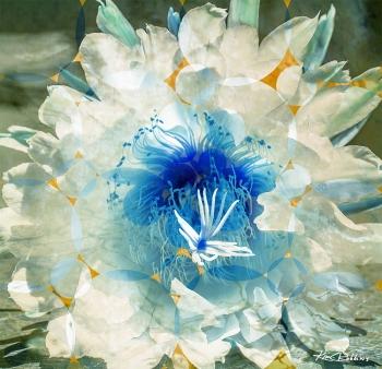 Floating Bloom
