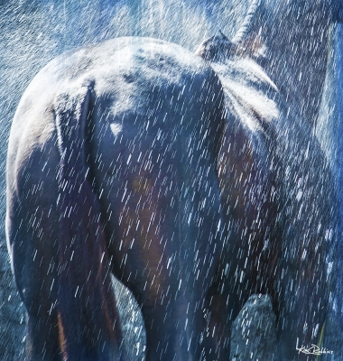 Horse & Water