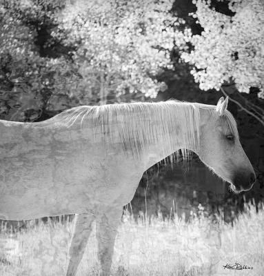 Horse & Aspen's