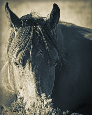 Horse & Sage