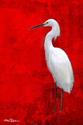 The Great White Egret #2