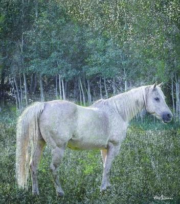 White Horse in the Aspens