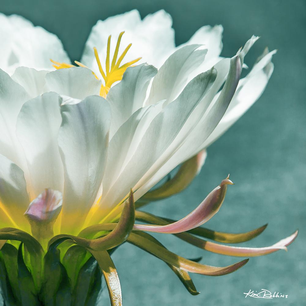 Cactus Bloom 24x24