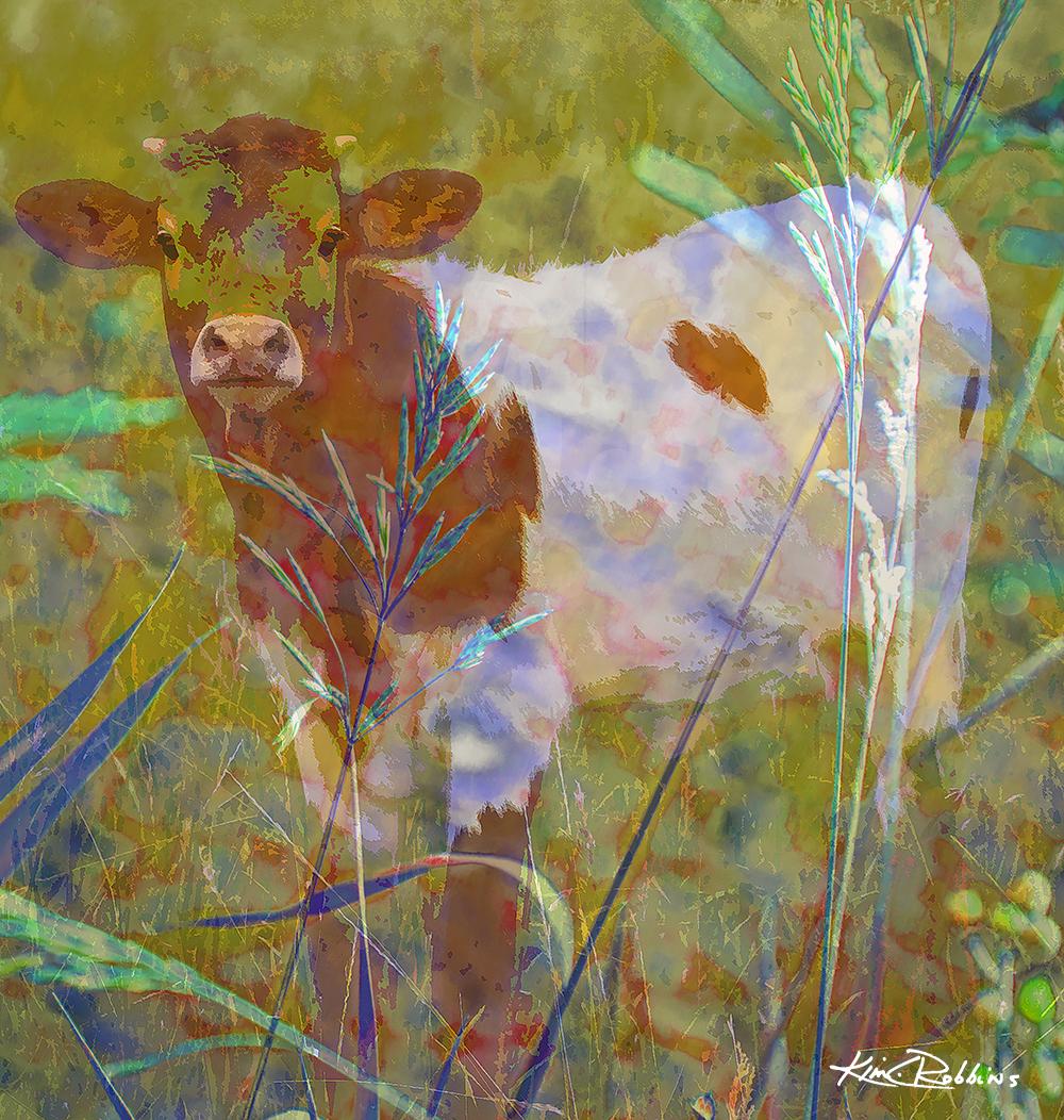 Colorful Calf