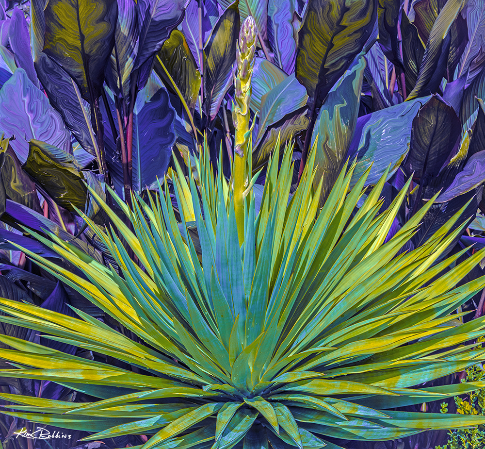 Jungle Yucca #3