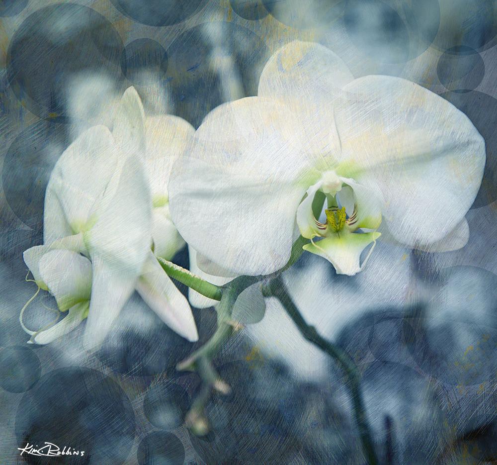 Orchids in Indigo