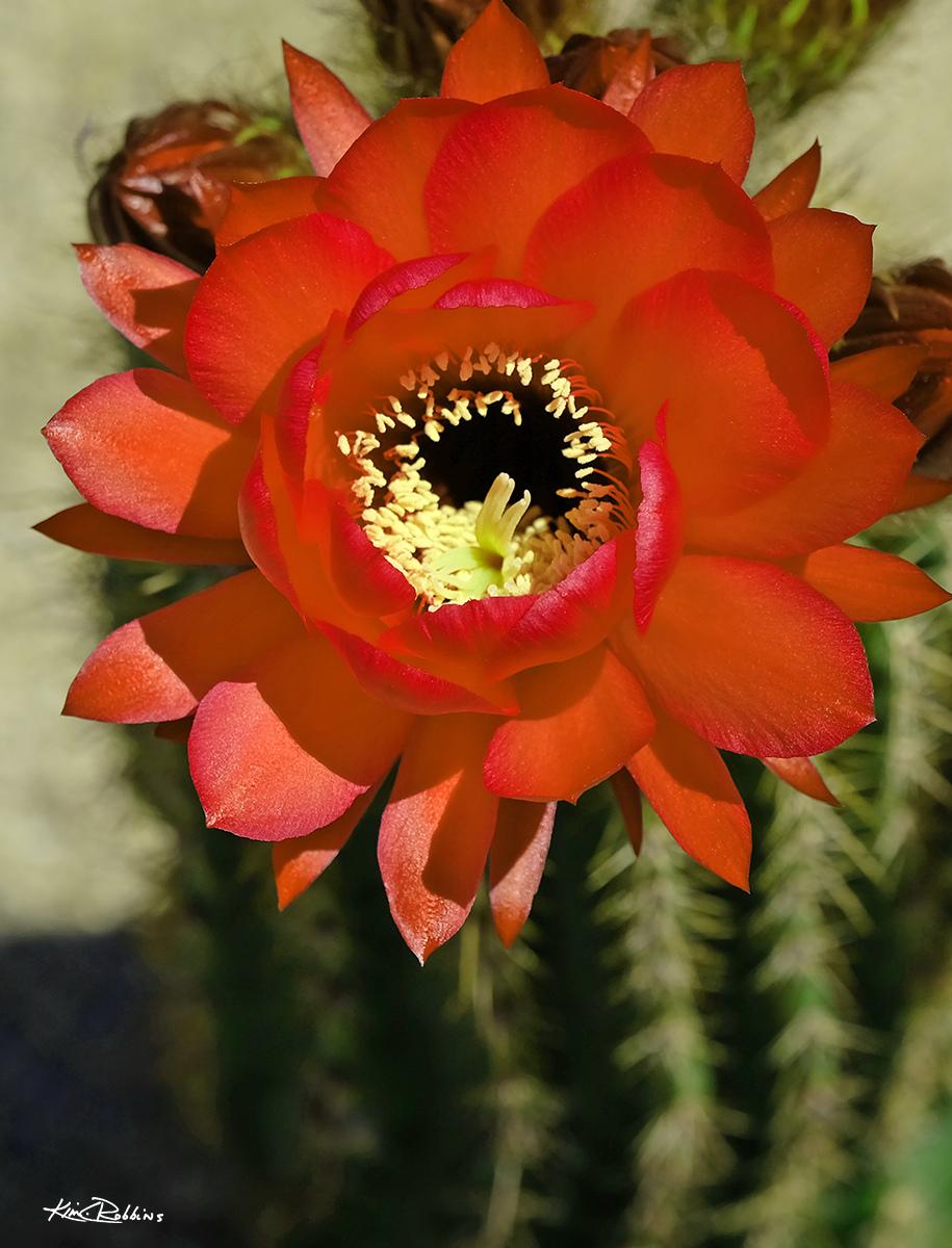 Sunkissed Bloom