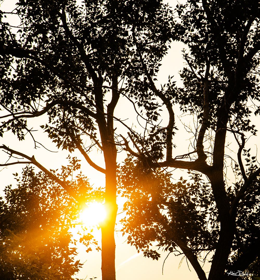 Trees in Silhouette #1