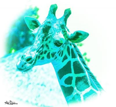 Giraffe #2