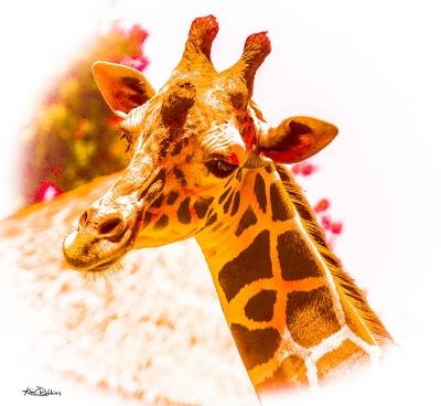 Giraffe #1