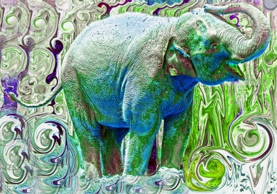 Elephant and Water