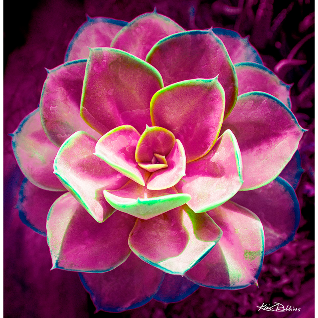 pink-succulent-1024x1024.png